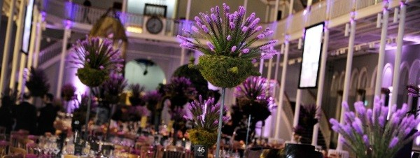 A Thistle Spectacular